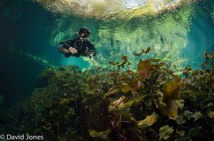 Cave, cavern, Grotte, Höhle Gran Cenote