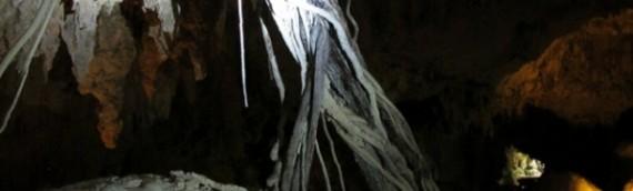 Versteinerte Wurzeln